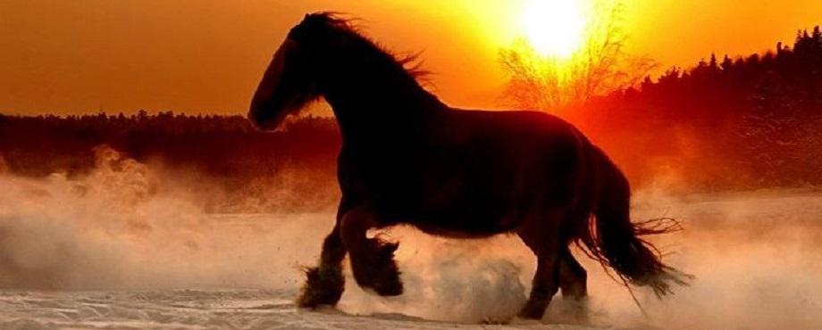 Turridning Clydesdalehäst