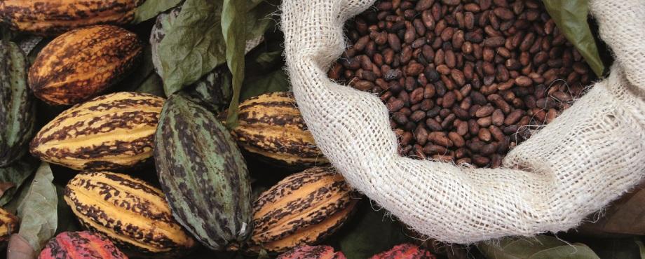 Chokladprovning. Prova choklad, tryfflar, praliner.